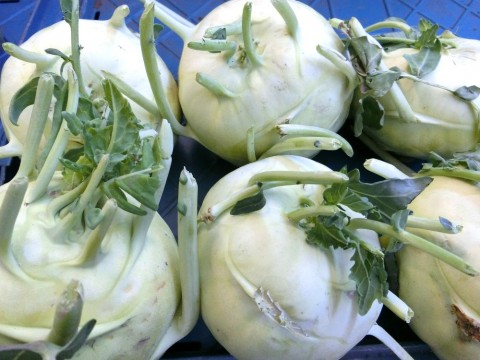 white kohlrabi bulbs