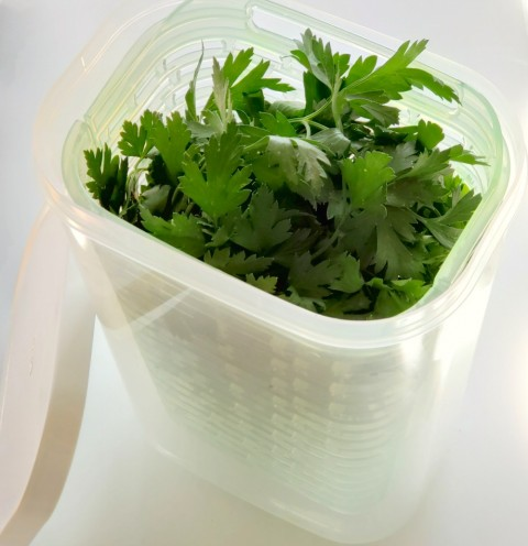 Italian Parsley in the OXO Greensaver Herb Keeper